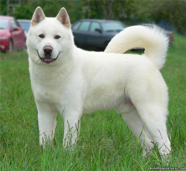 Собака на букву